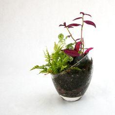 Terrarium in a vase