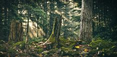 Forest by Oliver K   Nature   3D   CGSociety