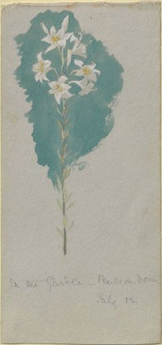 Trotter, Lillias - Study of a Lily (Leaf from a Sketch-Book of Norwegian Scenes)