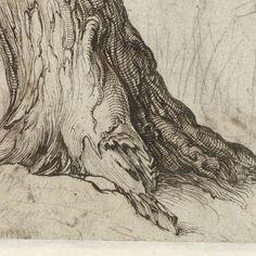 Study of a tree trunk, Jacob de Gheyn (II), 1598 - 1608 - Rijksmuseum - Gardening for beginners and gardening ideas tips kids Tree Trunk Drawing, Tree Drawings Pencil, Art Drawings, Drawing Art, Tree Trunk Painting, Drawing Trees, Texture Drawing, Texture Art, Tree Study