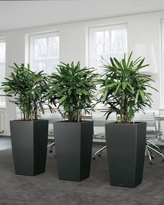 Plants as Room Dividers   ... be key design elements on their own. Usethem as room dividers