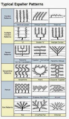 Outdoors on Share Sunday is part of Espalier fruit trees - chart of espalier shapes Espalier Services via Atticmag (trees grown against walls) Garden Trellis, Fruit Garden, Garden Care, Edible Garden, Vegetable Garden, Potager Garden, Pergola Garden, Water Garden, Espalier Fruit Trees