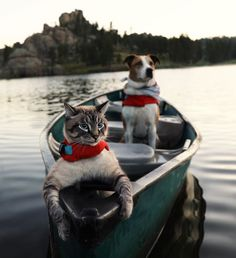 Like puppies, bunnies, babies, and so on. A place for really cute pictures and videos! Cute Baby Animals, Animals And Pets, Funny Animals, Animals Images, Animal Pictures, I Love Cats, Cute Cats, Adventure Cat, Dog Travel