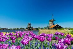 10 Top-Rated Day Trips from Amsterdam   PlanetWare
