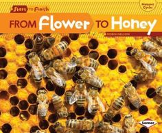 DIY Mason Jar Beekeeping Growing a beehive may not seem a suitable idea for suburban homesteaders due to space limitations. However, with a little bit Beekeeping For Beginners, Raising Bees, Bee Boxes, Chamomile Tea, Whole Foods Market, Blossom Flower, Mason Jar Diy, Bee Keeping, Diy Art