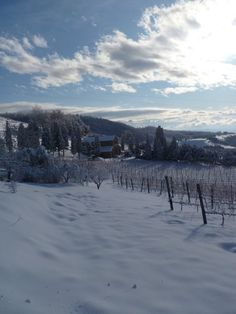 Montalcino, IT (Tuscany) after snow! http://www.ilpalazzone.com/il-palazzone-2/ever-seen-a-cypress-do-the-splits/