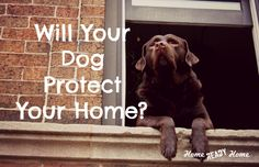 Will Your Dog Protect Your Home? (Home Ready Home)