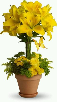 Order Yellow Fellow flower arrangement from Magical Moments Flowers & Gifts, your local El Paso, TX florist. Send Yellow Fellow floral arrangement throughout El Paso and surrounding areas. Home Flowers, Church Flowers, Cut Flowers, Fresh Flowers, Yellow Flowers, Spring Flowers, Flowers Garden, Beautiful Flower Arrangements, Tropical Flowers