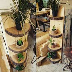 Tree rounds as shelves. Neutral, natural, plants, interior, decor