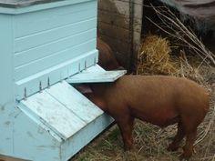 Hog self-feeder USDA plan (5756)