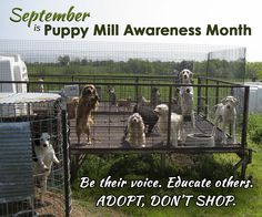 """Please REPIN to educate others. Google """"puppy mills"""" to learn more about how they are legal business in the USA and how we can stop them. #NMDR #Rescue #AdoptDon'tShop"""