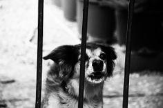 Хапещо куче – за или против евтаназията
