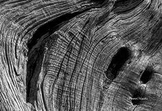 Complimenti, la tua foto entra di diritto sul nostro Magazine Monocromaticamente, sempre aggiornato con tutte le novità dell'omonimo gruppo totalmente dedicato alla fotografia in Bianco e Nero: – Blog Ufficiale:www.monocromaticamente.it – Magazine:http://flip.it/hs6VB (clicca e sfoglialo...