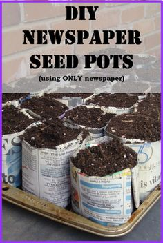 Newspaper Activities Day 8: Seed Pots - Cornerstone Confessions