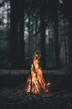 Burning fire at the woods.