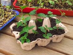 boite-a-oeuf-plantation. Recycling, Egg Carton Crafts, Seed Starting, Diy Crafts For Kids, Vegetable Garden, Outdoor Gardens, Floral, Hotmail Fr, Images