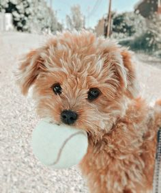 Cute Baby Puppies, Super Cute Puppies, Baby Animals Super Cute, Cute Wild Animals, Baby Animals Pictures, Cute Little Animals, Cute Animal Pictures, Cute Funny Dogs, Cute Funny Animals