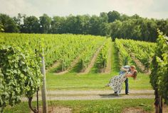 vineland niagara winery engagement  Tied Photo & Films  #vinelandengagement #winerywedding Vineland Estates, Engagement Session, Road Trip, Weddings, Film, Outdoor, Movie, Outdoors, Film Stock