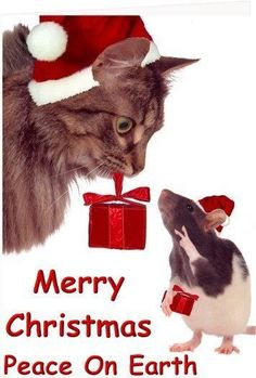 christmas mouse giving the peace sign merry christmas cat christmas love christmas pictures - Merry Christmas Cat