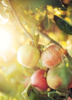 How to grow fruit trees in a small urban garden | bcliving