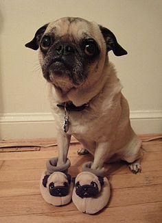like my slippers?