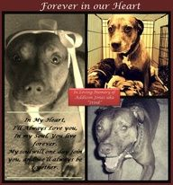 """It is with heavy hearts, that The Pitbull Crew asks you to remember Addison Jones, a Pitbull Crew Original Ambassador belonging to Jen Bettuchy who sadly passed away Sunday morning. """"Stink"""" as we lovingly called her, will be missed by all, and we ask today to give your own dogs a special kiss on the head  a hug in memory of Addison Jones while we dedicate this day to her.    www.pitbullcrew.com"""