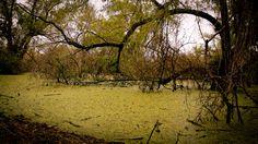 Reserva ecoógica Santa Fe, Argentina #reserva #ecología #airelibre #photography #green #nature #naturaleza