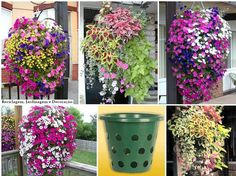 Aproveitando utensílios domésticos para plantar vida