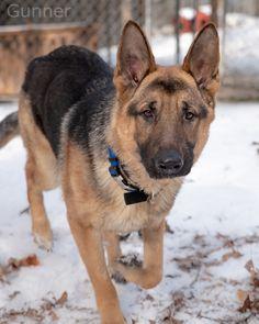 German Shepherd Metal Weathervane Roof Mount police dog Alsatian