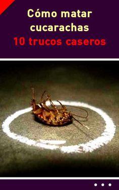 Como matar cucarachas. 10 trucos caseros #cucarachas #insects #eliminar #sintoxico