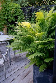 Black Garden, Green Garden, Landscape Design, Garden Design, The Constant Gardener, Growing Gardens, My Secret Garden, Terrace Garden, Outdoor Gardens