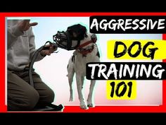 Stop Serious Dog Aggression with an Ecollar - Dog aggression Ecollar correction tutorial! - YouTube