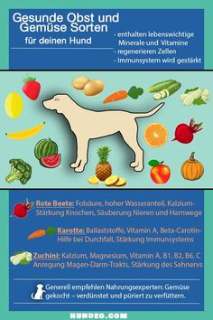 30 gesunde Obst und Gemüse Sorten für Hunde Would you like to know everything about healthy fruits and vegetables for your dog? Here you get a compact infographic. Dog Treat Recipes, Dog Food Recipes, Healthy Foods To Eat, Healthy Life, Healthy Fruits And Vegetables, Dog Treats, Animals And Pets, Pet Care, Your Dog