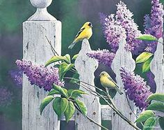 Summer Lilacs -Goldfinch by Susan Bourdet