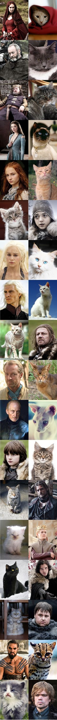 Game of Thrones... Now with Cats!  This is an absolute treasure! Sooo funny, some of the similarities are uncanny! =^_^=