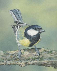 """""""Small but Great"""" is my original watercolor painting of a Great tit. This watercolor measures approximately 8 x 10 inches. It is painted on acid free, 100% cotton, 300 lb. soft press Fabriano Artistico extra white watercolor paper with Winsor & Newton watercolors and is signed by me the artist. Watercolor Bird, Watercolor Paintings, Bird Paintings, Watercolors, Vogel Illustration, Winsor And Newton Watercolor, Bird Coloring Pages, Great Tit, The Artist"""
