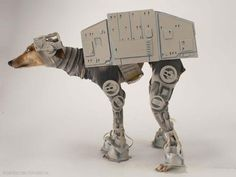 Excited about the recent Star Wars announcement? Now your dog can get in on the fun!