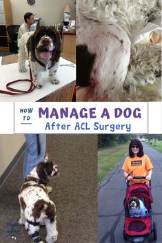 Dog health means healthy joints and bones, too. When our dog had double ACL…