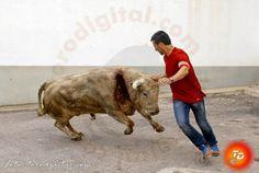 torodigital: La Foia, concentra la fiesta taurina en l'Alcora