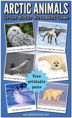 Arctic Animals Gross Motor Movement Game