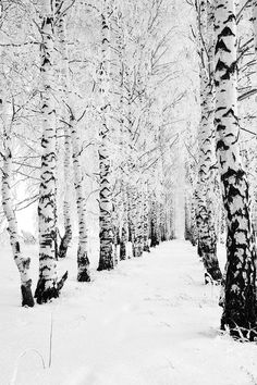 New winter landscape photography wonderland paths Ideas Winter Szenen, I Love Winter, Winter Magic, Winter Christmas, Winter Trees, Snowy Trees, Winter Walk, Snow Covered Trees, Hello Winter