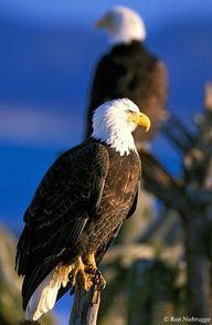 True Beauty! !  Homer, Alaska