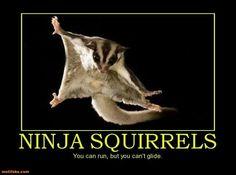 Ninja sugar glider
