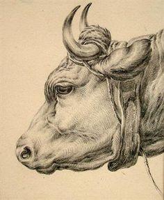 bison cowskulls drawing sketch image illustration | Art ...