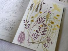 Angie Lewin, sketchbook, nature, drawing, watercolour, painting, illustration…