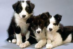 Horóscopo canino Virgo ( 24 de agosto – 23 de septiembre ). Los perros de virgo son muy limpios y finos. Nunca desparraman su comida , y les encanta ser bañados con agua perfumada . Son también uno de los perros más leales que existen , y son muy protectores. …