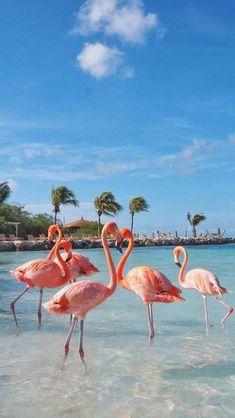 Flamingo Wallpaper, Ocean Wallpaper, Summer Wallpaper, Animal Wallpaper, Nature Wallpaper, Maldives Wallpaper, Tropical Wallpaper, Travel Wallpaper, Aesthetic Pastel Wallpaper