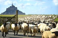In this walking tour you'll be visiting the beauty of the Mont-Saint-Michel in a traditional and authentic way. Your local guide will share with you the history of this iconic monument and will show you all the unique places to go so you can s Camping Normandie, Animation Sportive, Promenade En Bateau, St Michael's Mount, Day Trip From Paris, The Mont, Station Balnéaire, Mont Saint Michel, France Europe