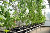 Why is hydroponics better?..