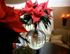 Thats CRAZY.. No DIRT Poinsettia centerpiece! Christmas Decorations - dining room - san diego - Robeson Design